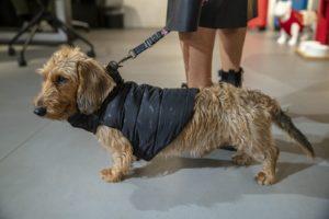 Doppio guinzaglio per cani di piccola taglia 2.8/m a vie regolabile Africa